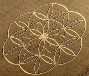 Flower of lifce crop circle